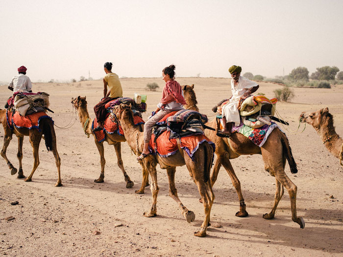 Our camel group.