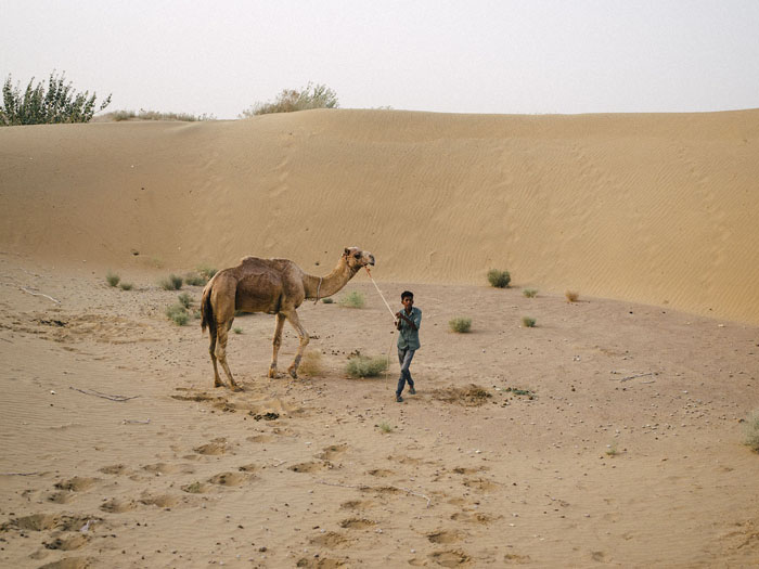 Finding some missing camels.