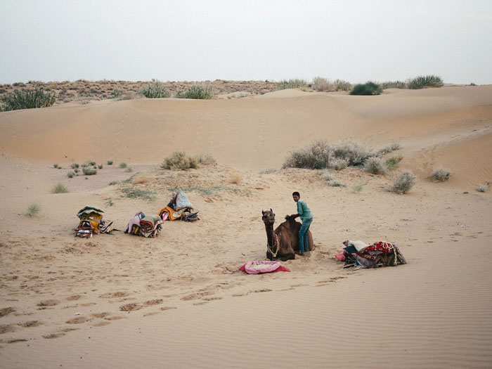 Preparing the camels for the night.