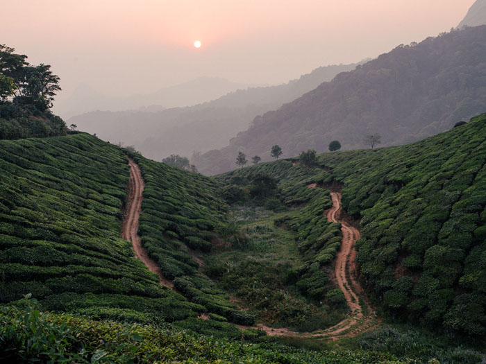 If you're into photography you're in for a treat in Munnar…