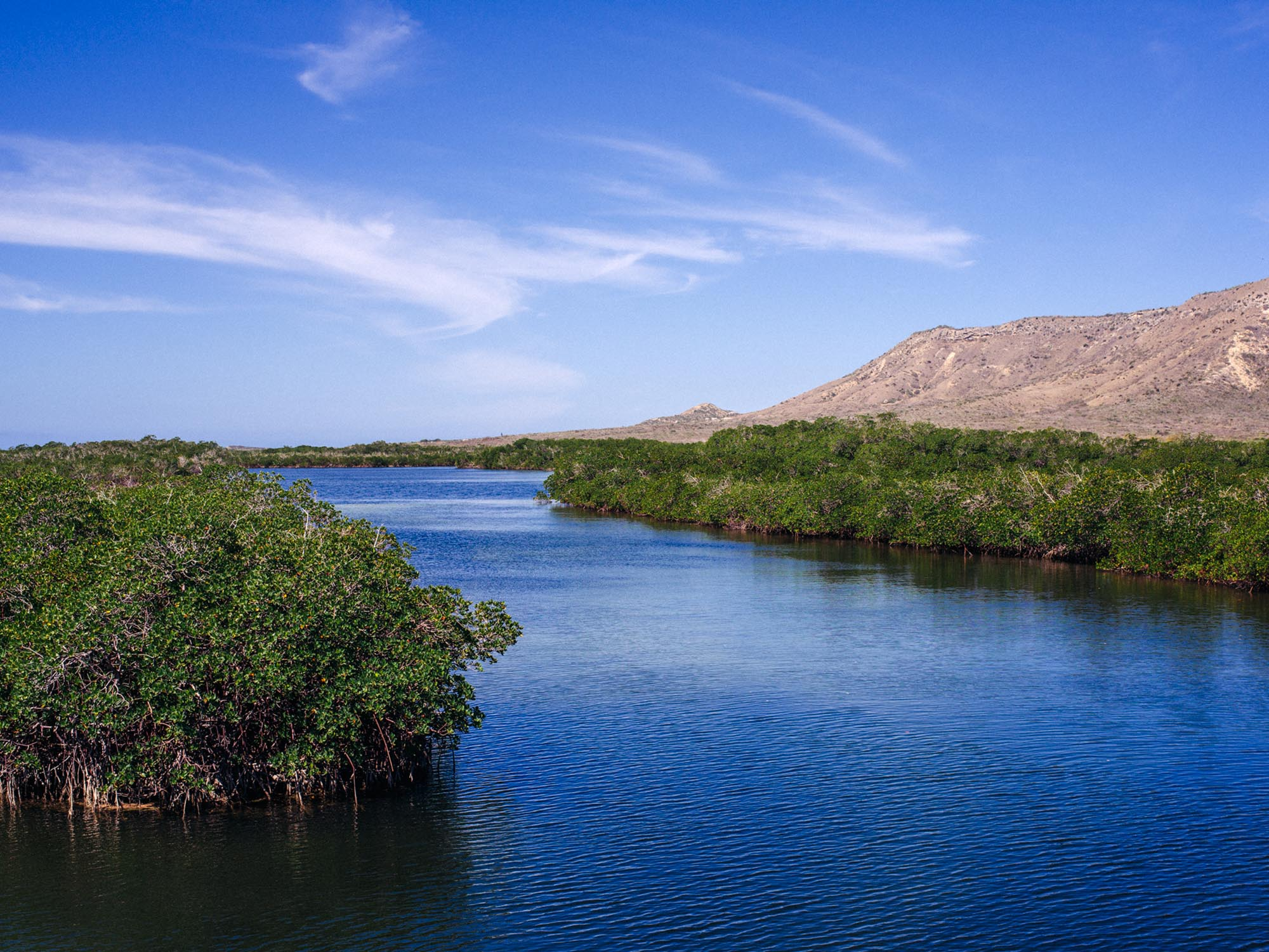 Mangroves in Montecristi.