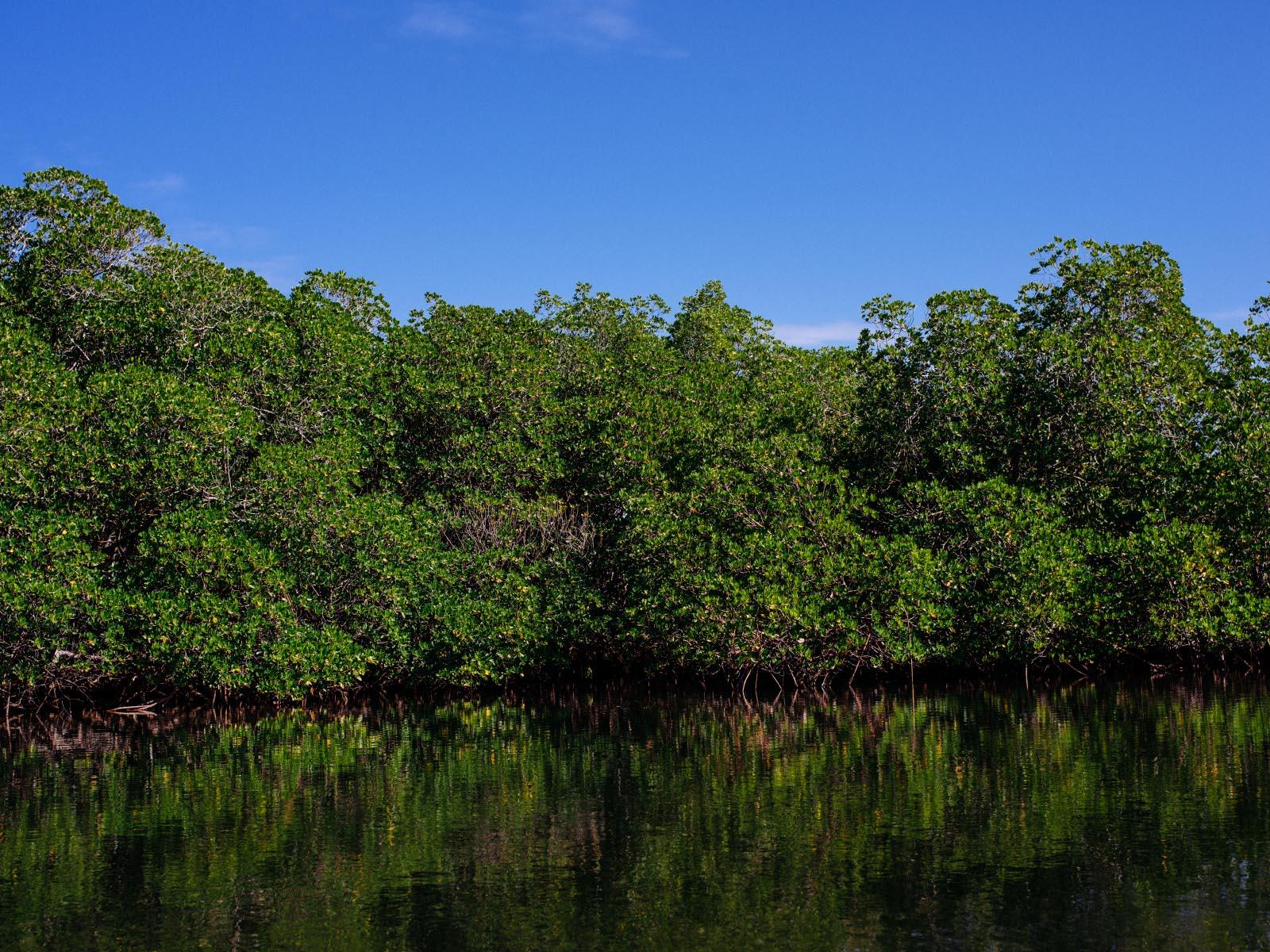 Mangroves in Punta Rucia.