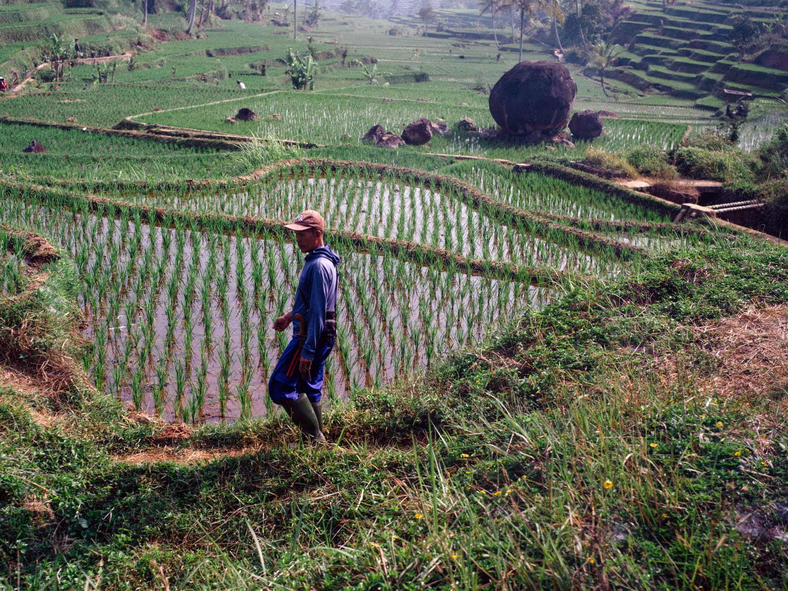 A man working on the rice fields.