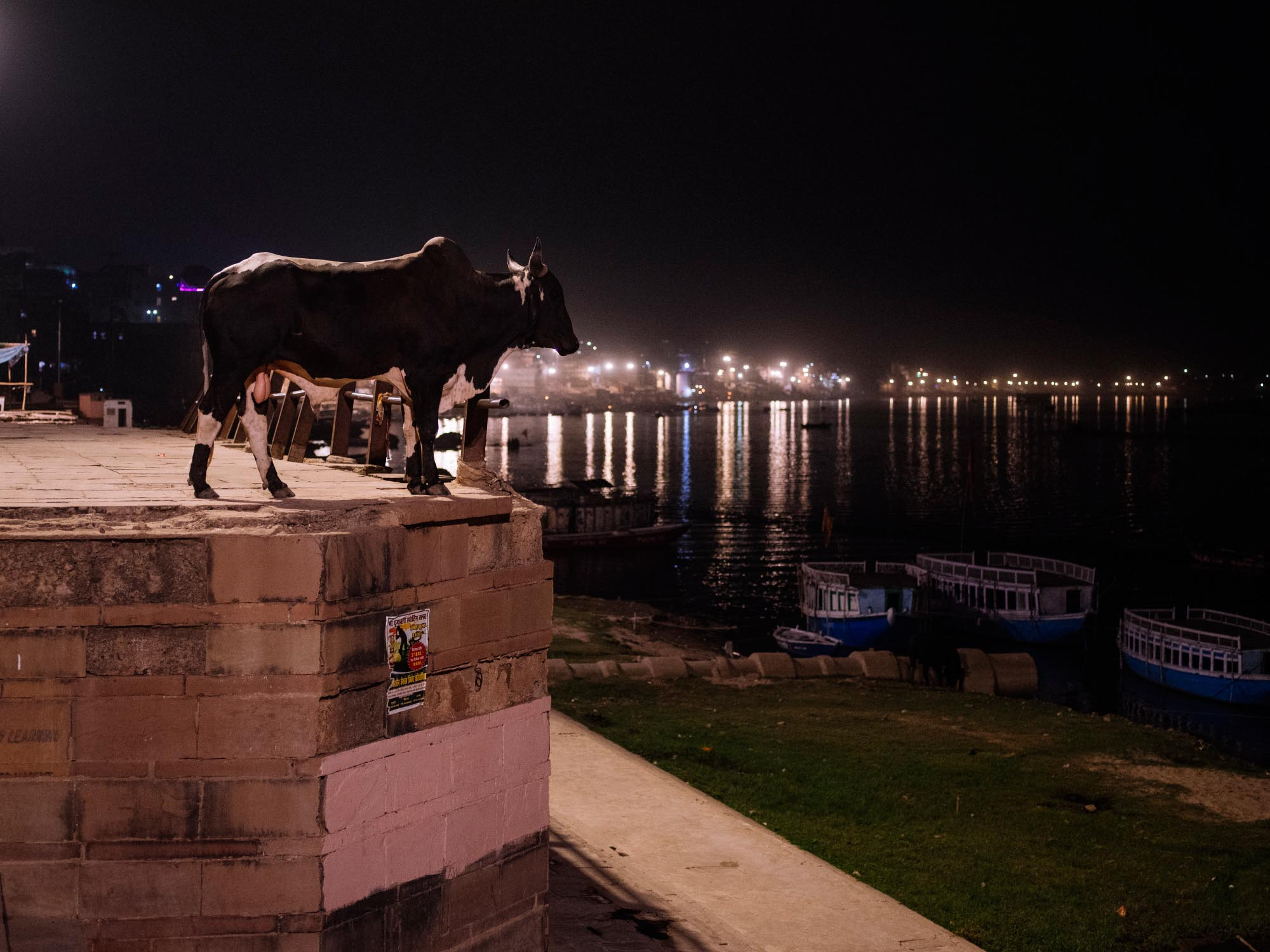 Bull overlooking the Ganges.