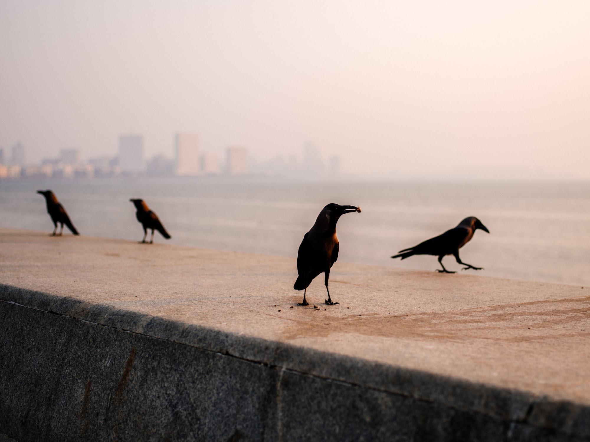 Bombay, India. 2018.