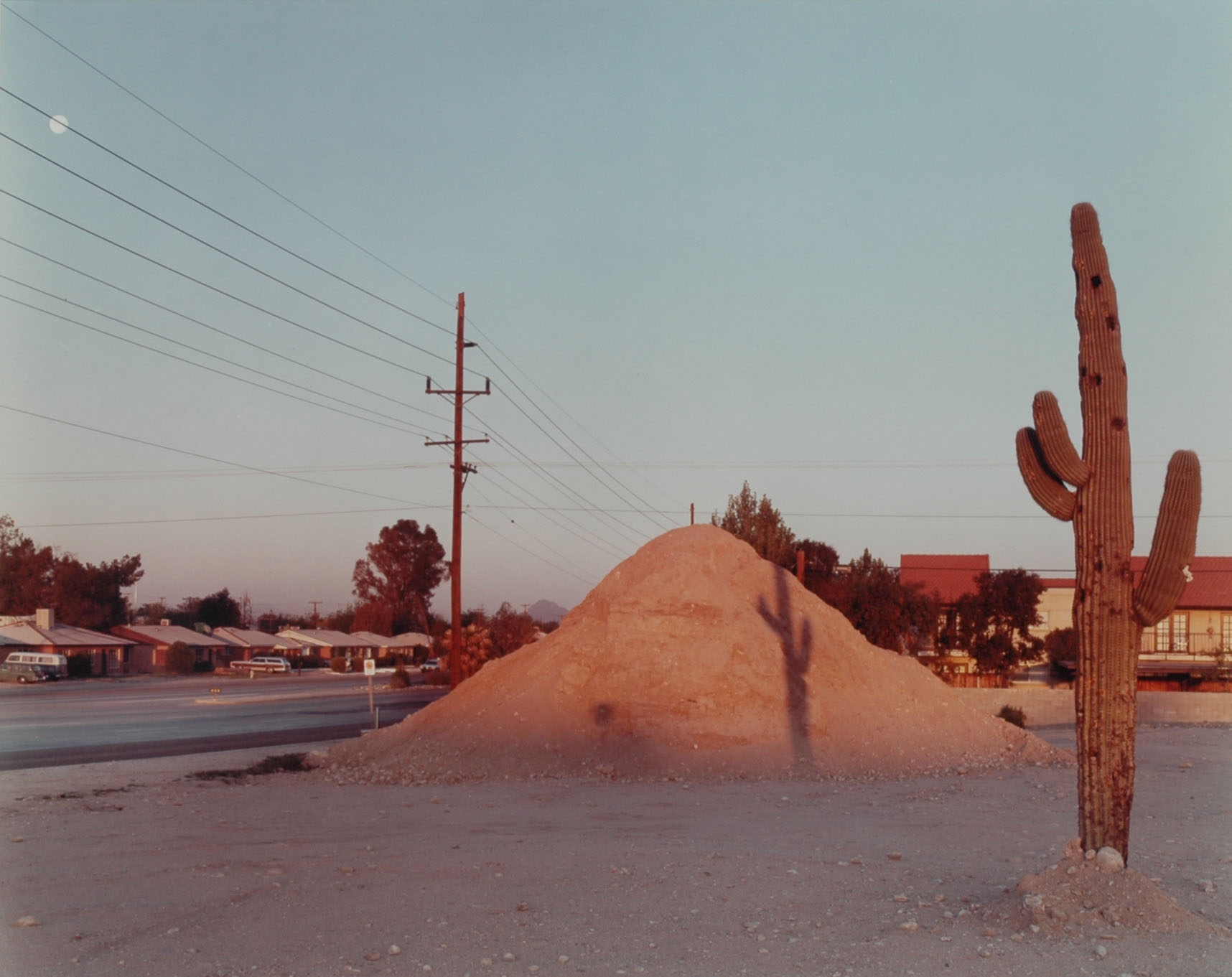 Cactus and telephone. © Joel Sternfeld