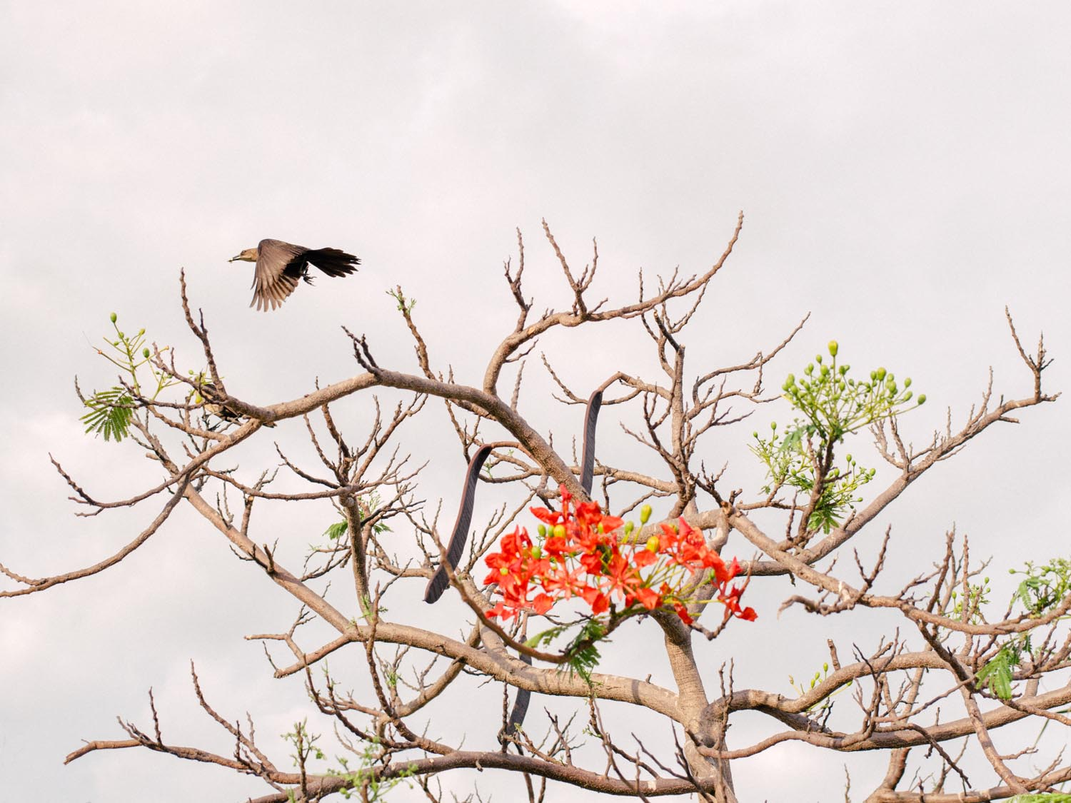 cartagena-colombia-photography-bird.jpg
