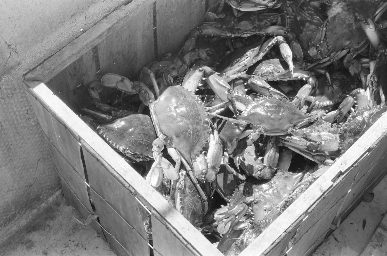 photography-feature-jonathon-moll-crab-fisherman-02.jpg