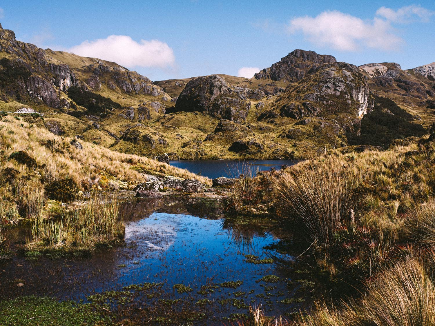 You should definitely visit Cajas National Park.