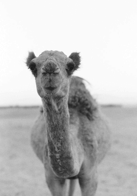 portrait-of-a-bedouin-tribe-by-sharon-zobali-2.10.jpg