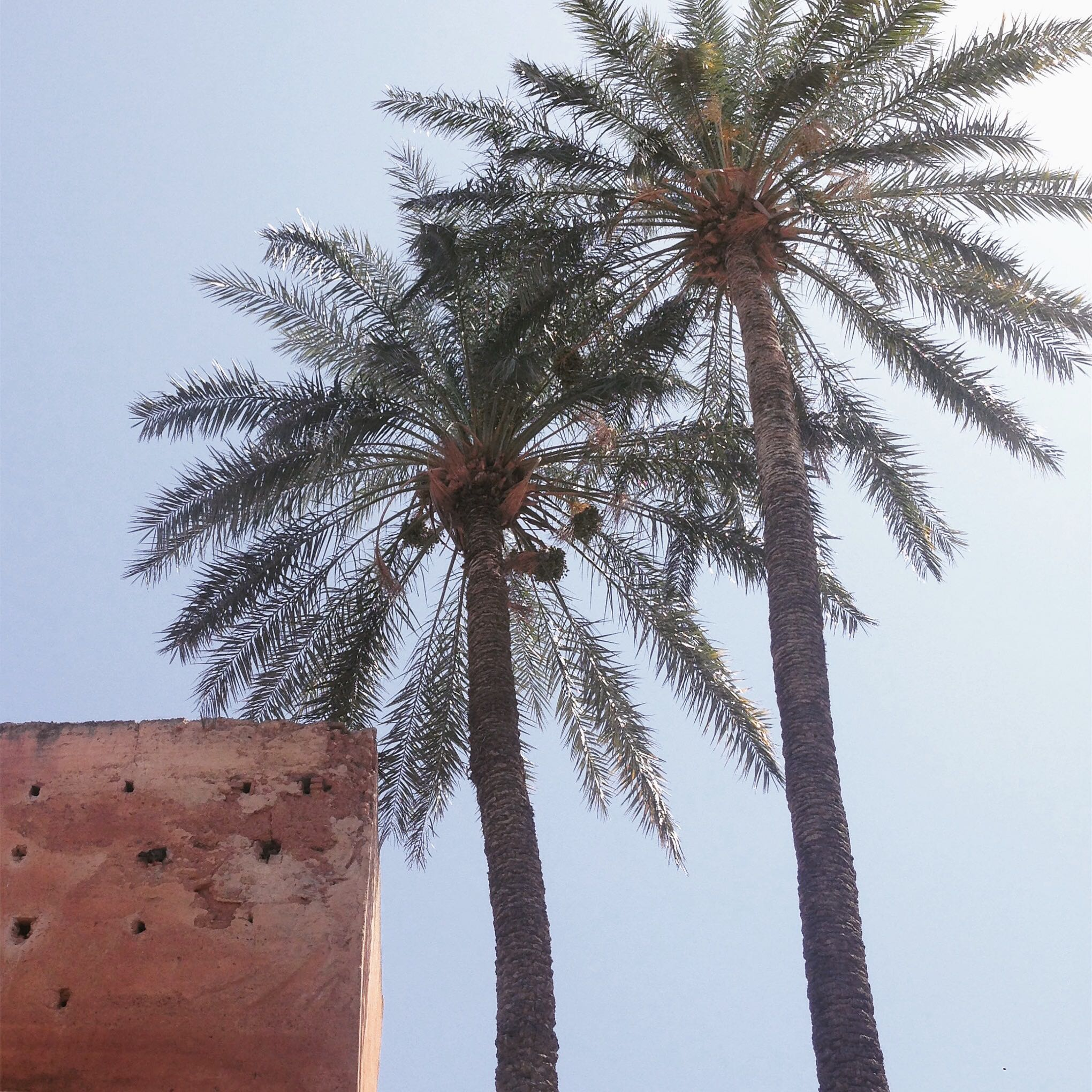 Lozidaze_Marrakesh-Palm-Trees_01
