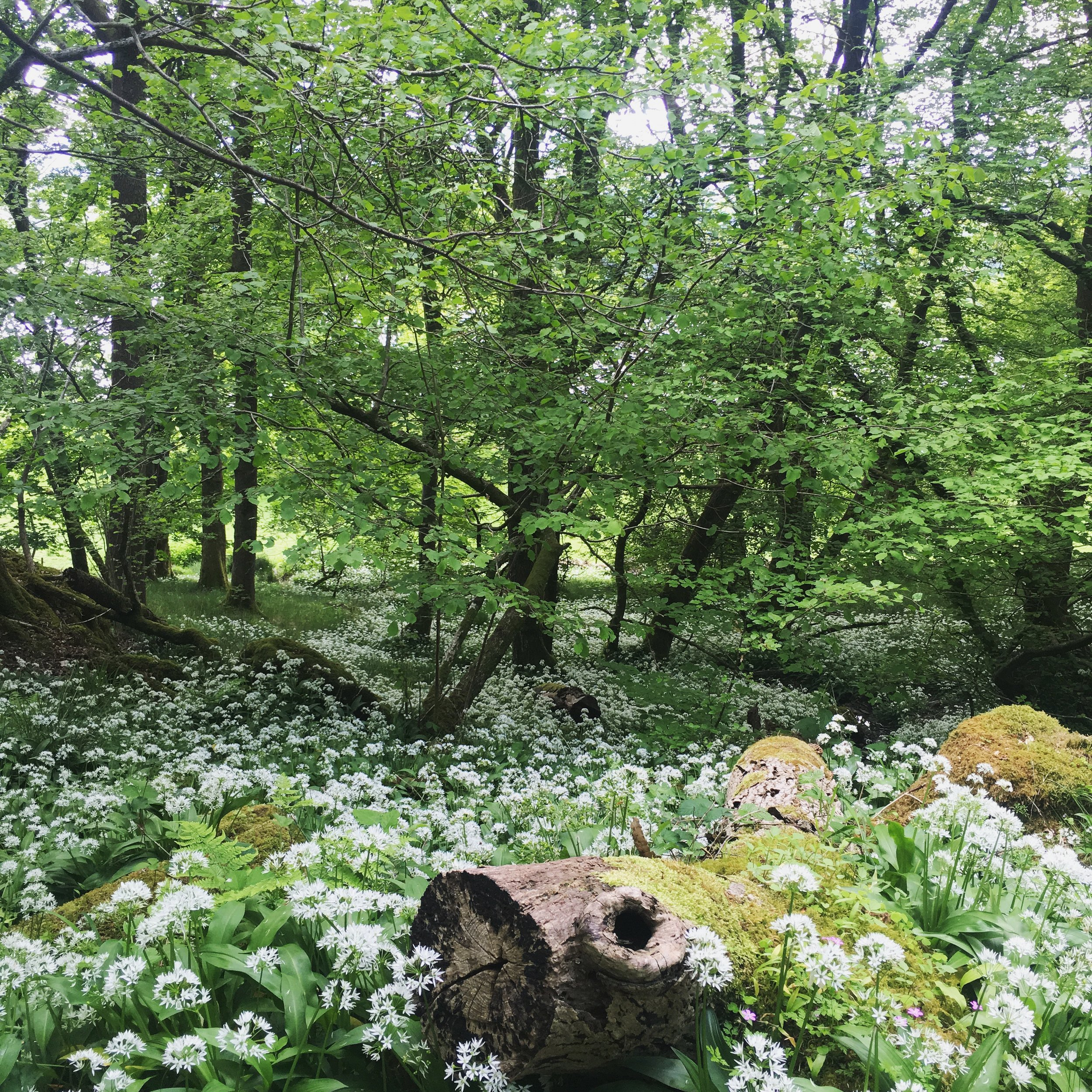 Lozidaze_LakeDistrict_Skelghyll-Woods_02