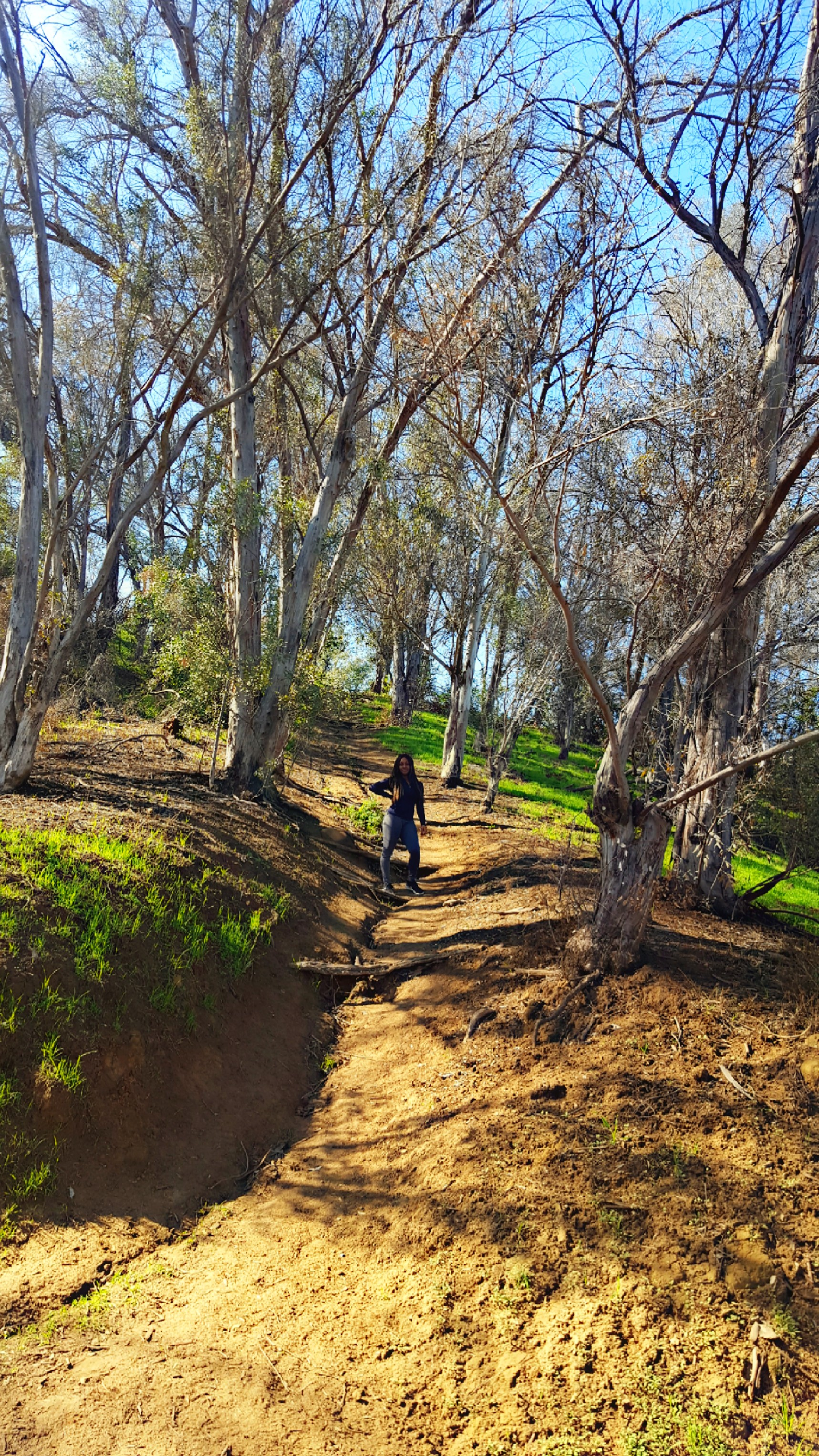 Elysian Park Trail, Los Angeles CA