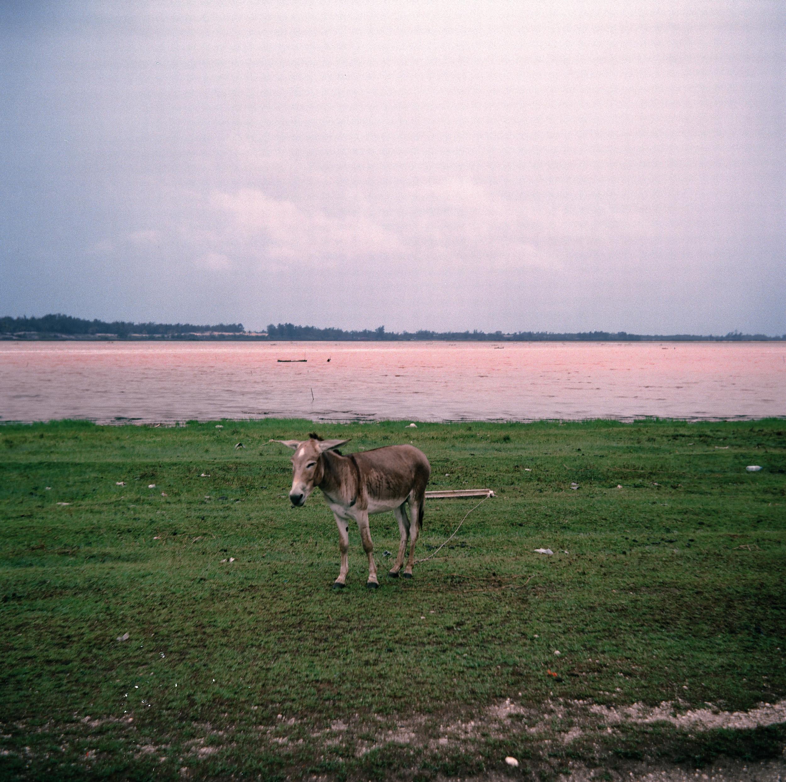 Lac Rose  Dakar, Senegal  2016