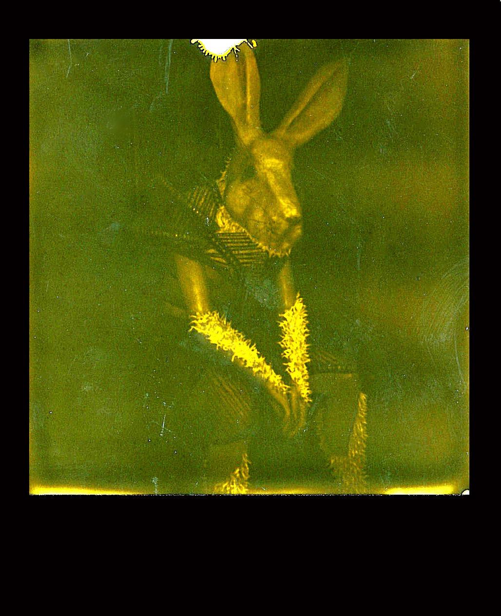 Tulio's Rabbit