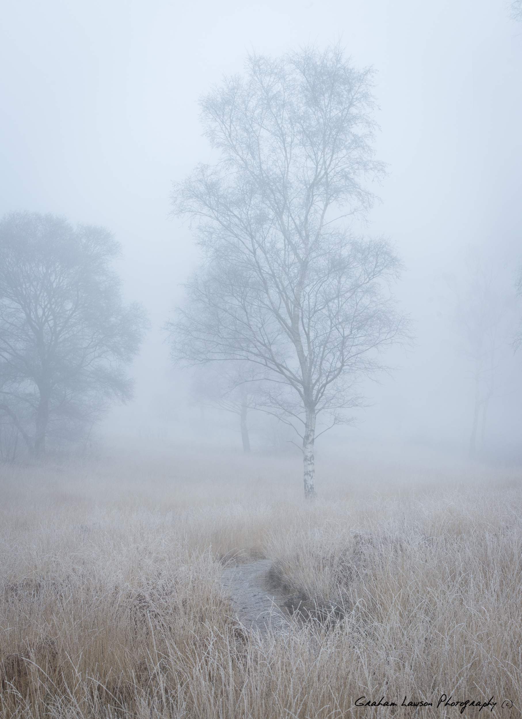 Cold Tree Path