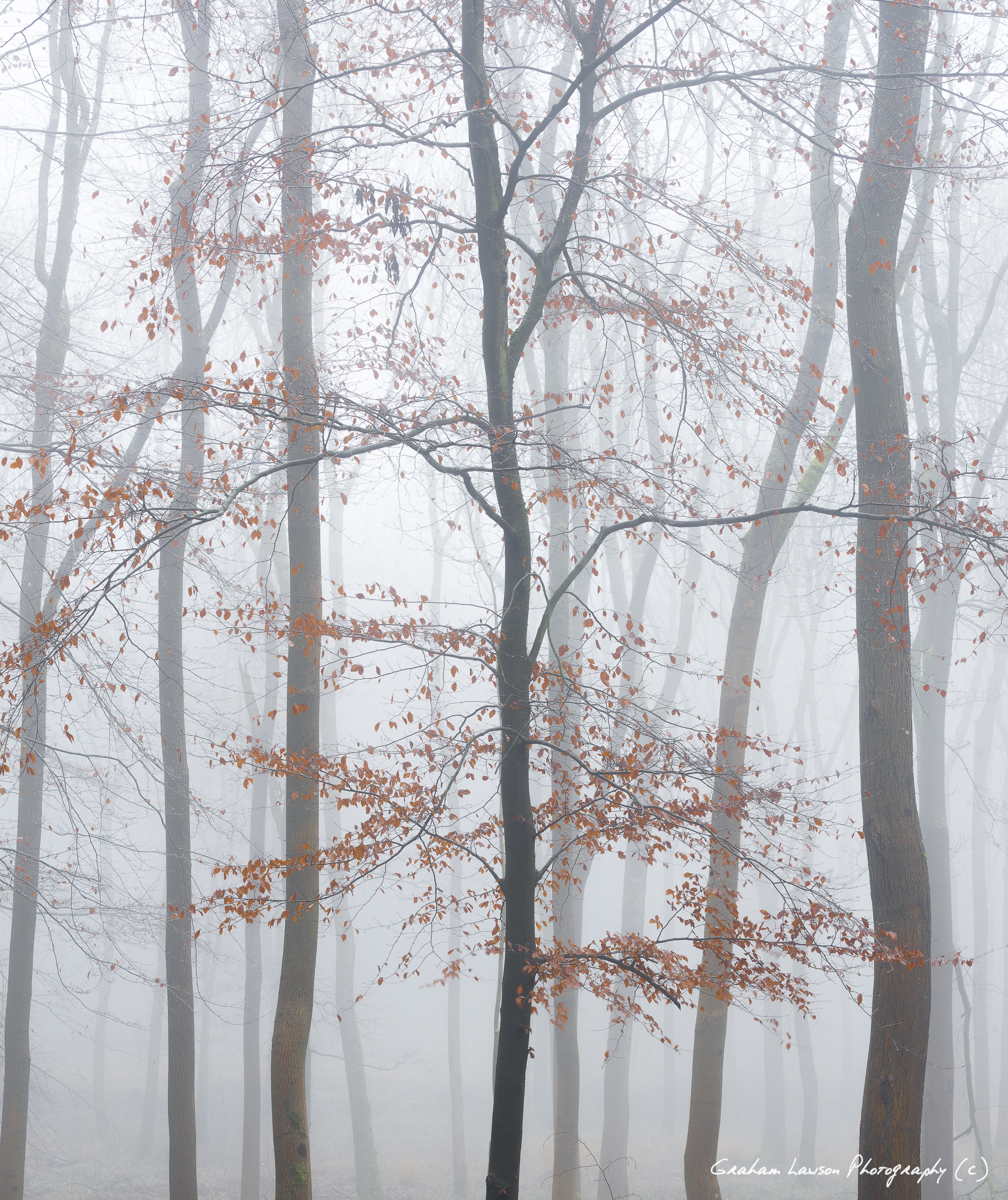 Colour in the Fog