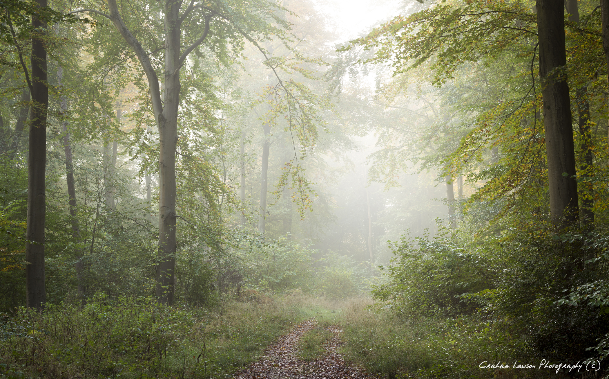 Into the Misty Wood
