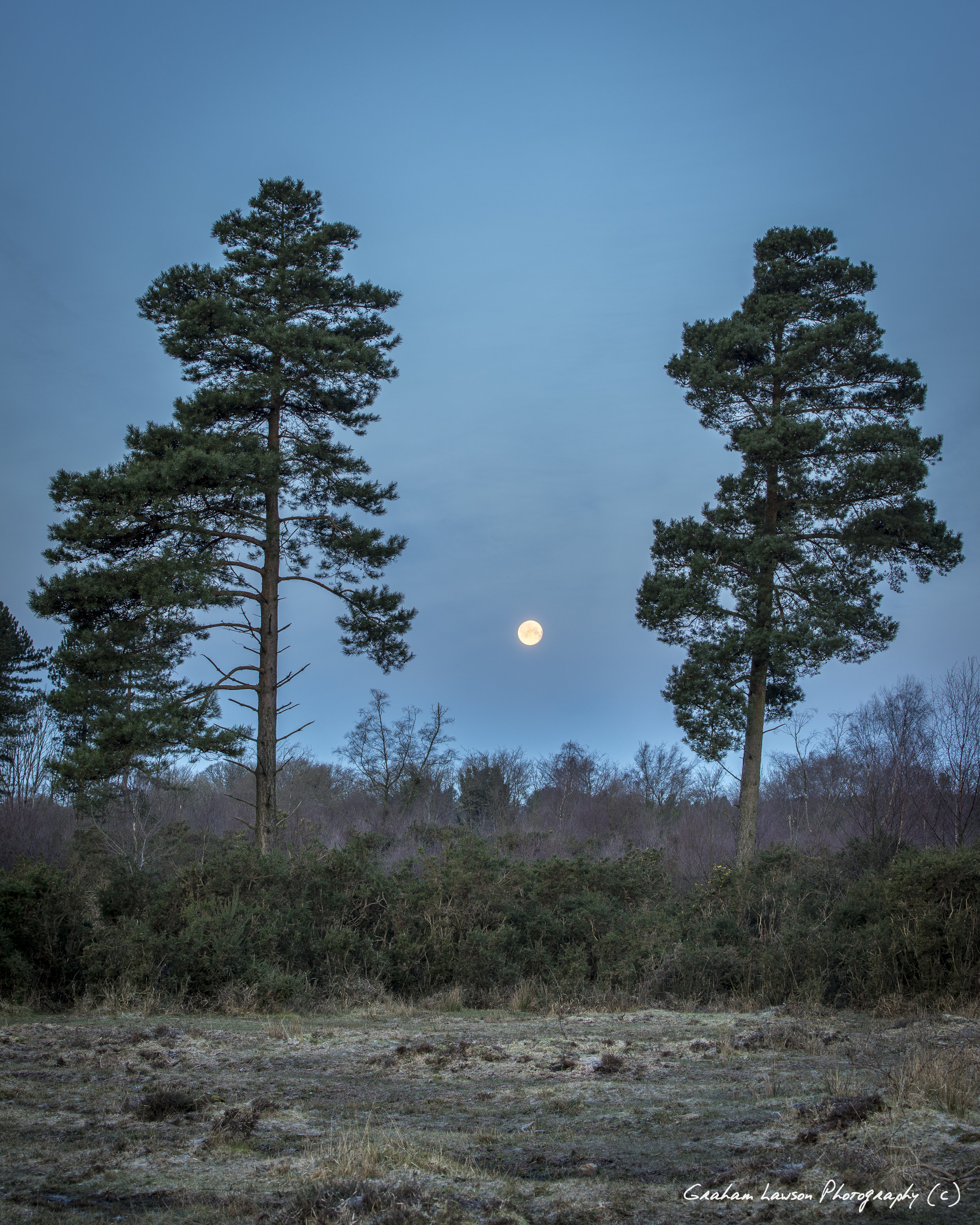 Two Pines and Moon