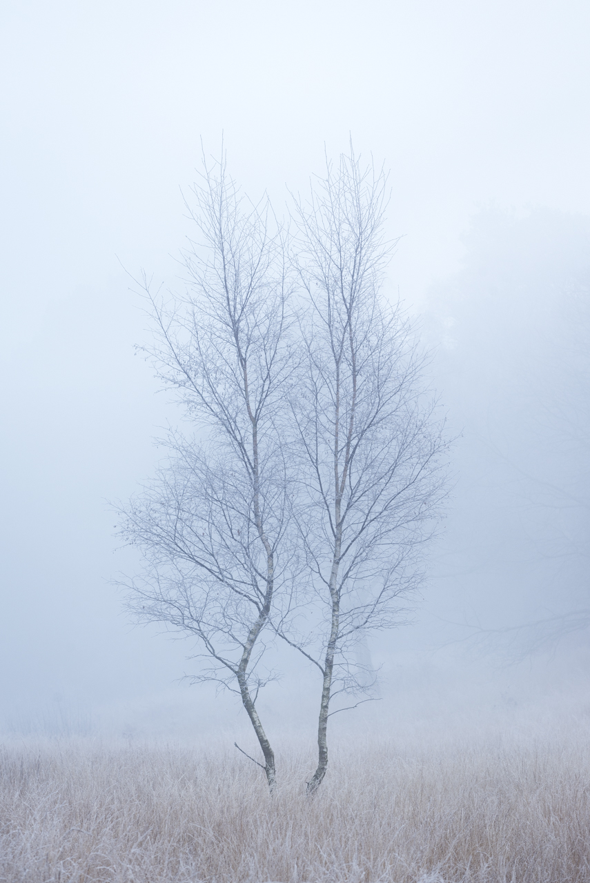 Winter Fog.jpg
