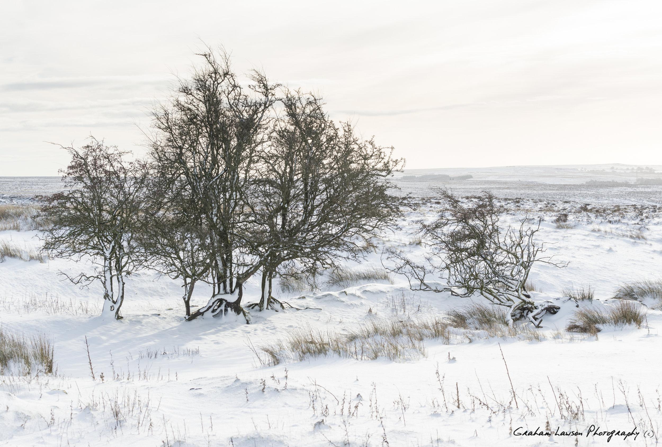 Llanover Snow