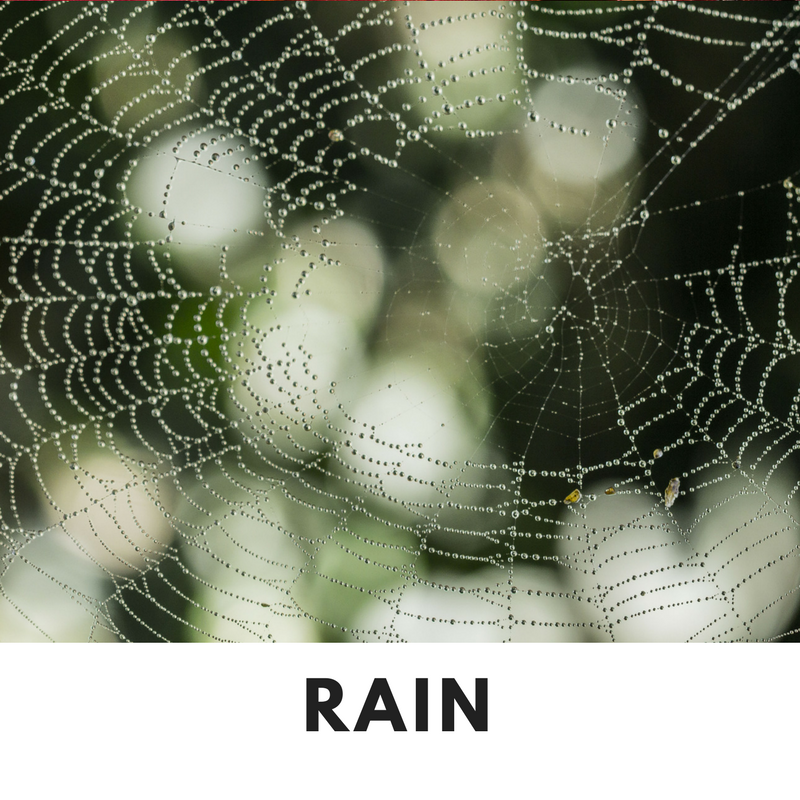 Rain Fall Scent