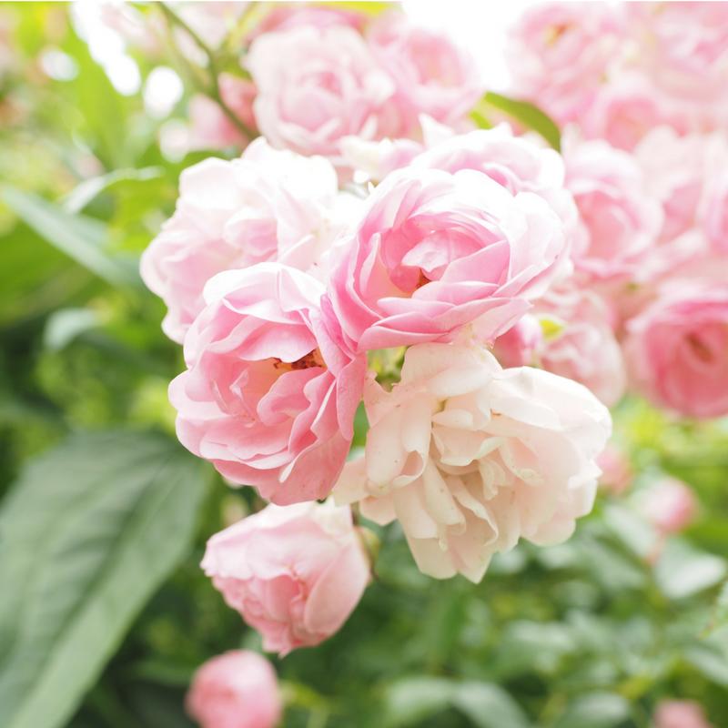 Bespoke Fragrance Page - Floral.png