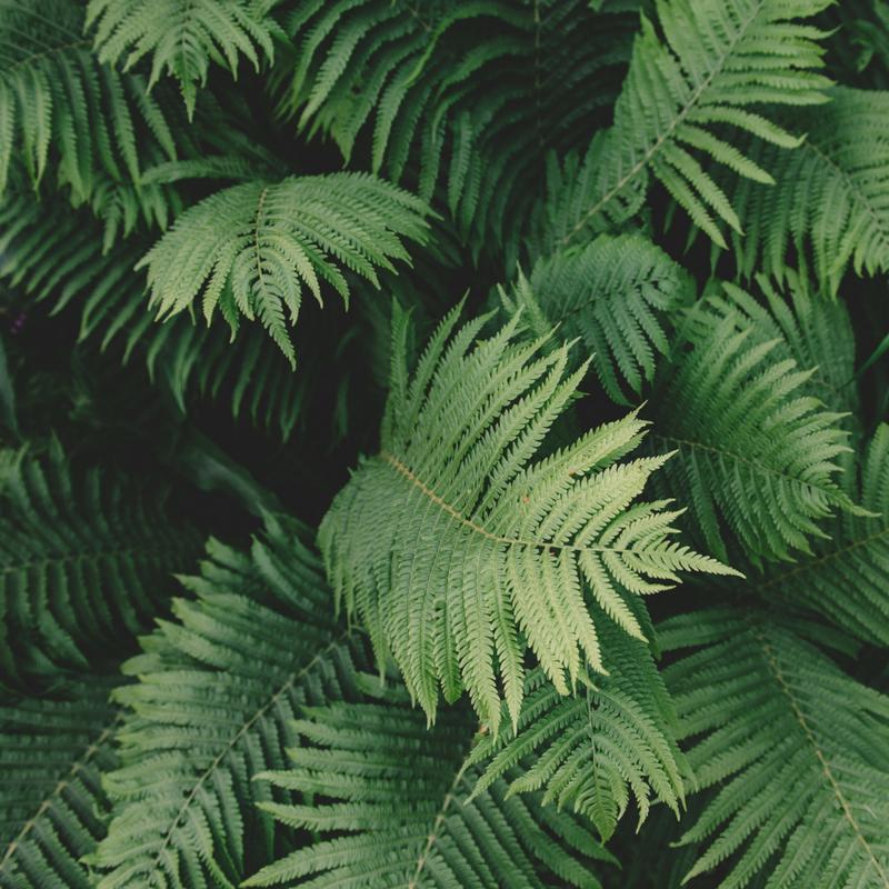 Bespoke Fragrance Page - green - fern.png