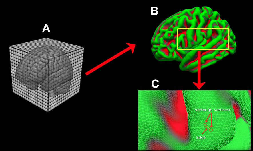Figure 3: Sample illustration of the FreeSurfer reconstruction (recon) process. (A) The T1-weighted anatomical scan is created by the scanner, usually with a resolution of about 1mm cubed. (B) The 3D anatomical image is converted by FreeSurfer's recon-all into a 2D mesh. The pial surface is displayed here. (C) A closeup of the mesh surface, showing its composition of Vertices (intersections of the triangles making up the mesh) and Edges (connections between vertices).