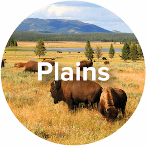 Ecosystem-Plains-Icon.jpg
