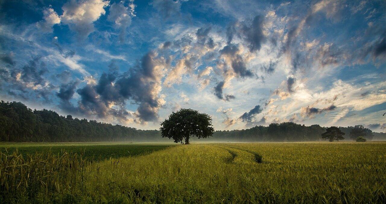 tree-247122_1280.jpg