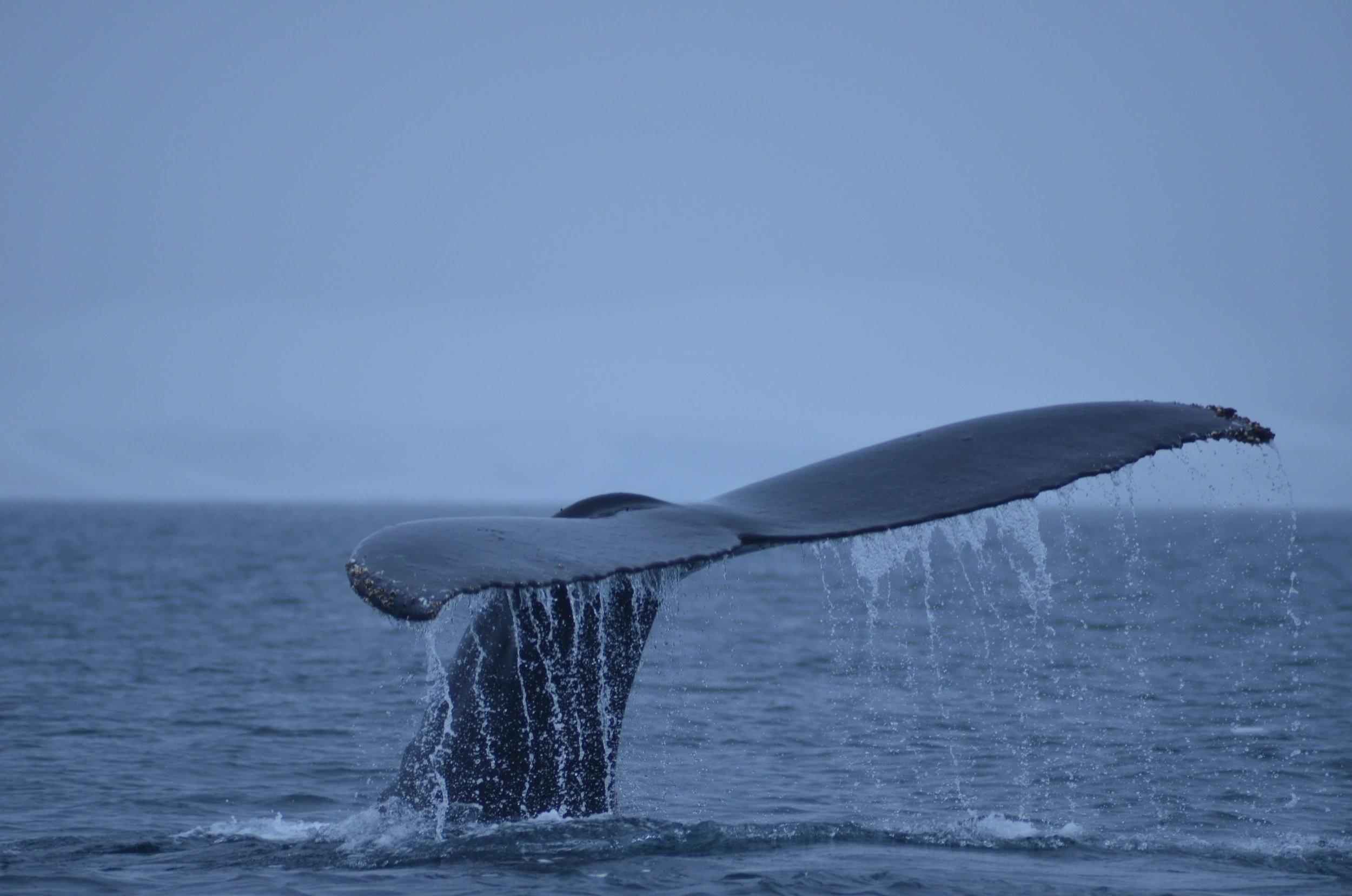 Antarctica_SharedPhotos_20130119_094247_083.jpg