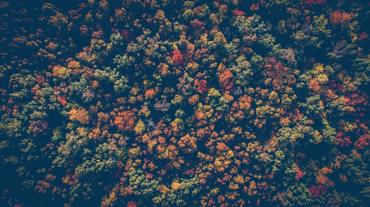 forest-1868529_1280.jpg