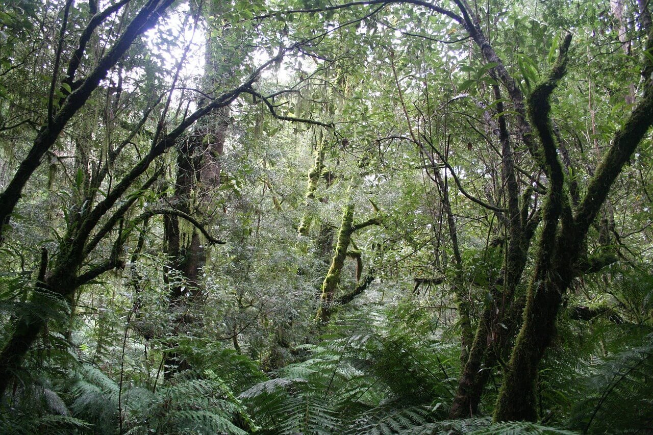 jungle-678503_1280.jpg