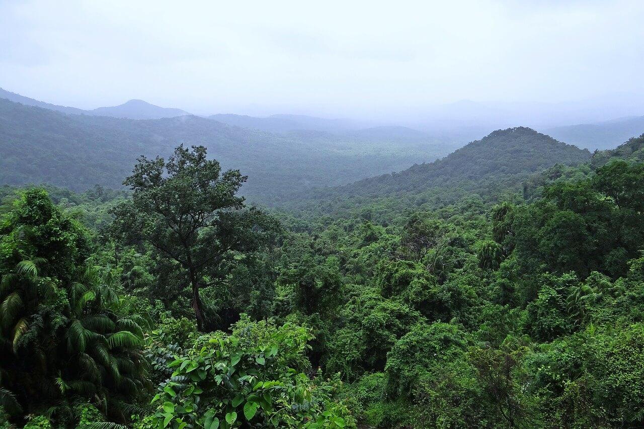 rainforest-384944_1280.jpg