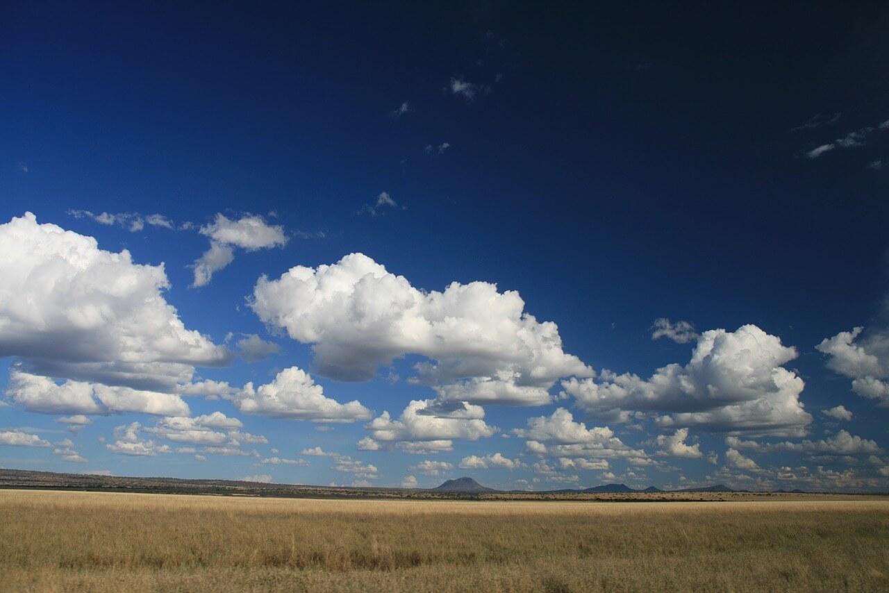 savannah-1623801_1280.jpg