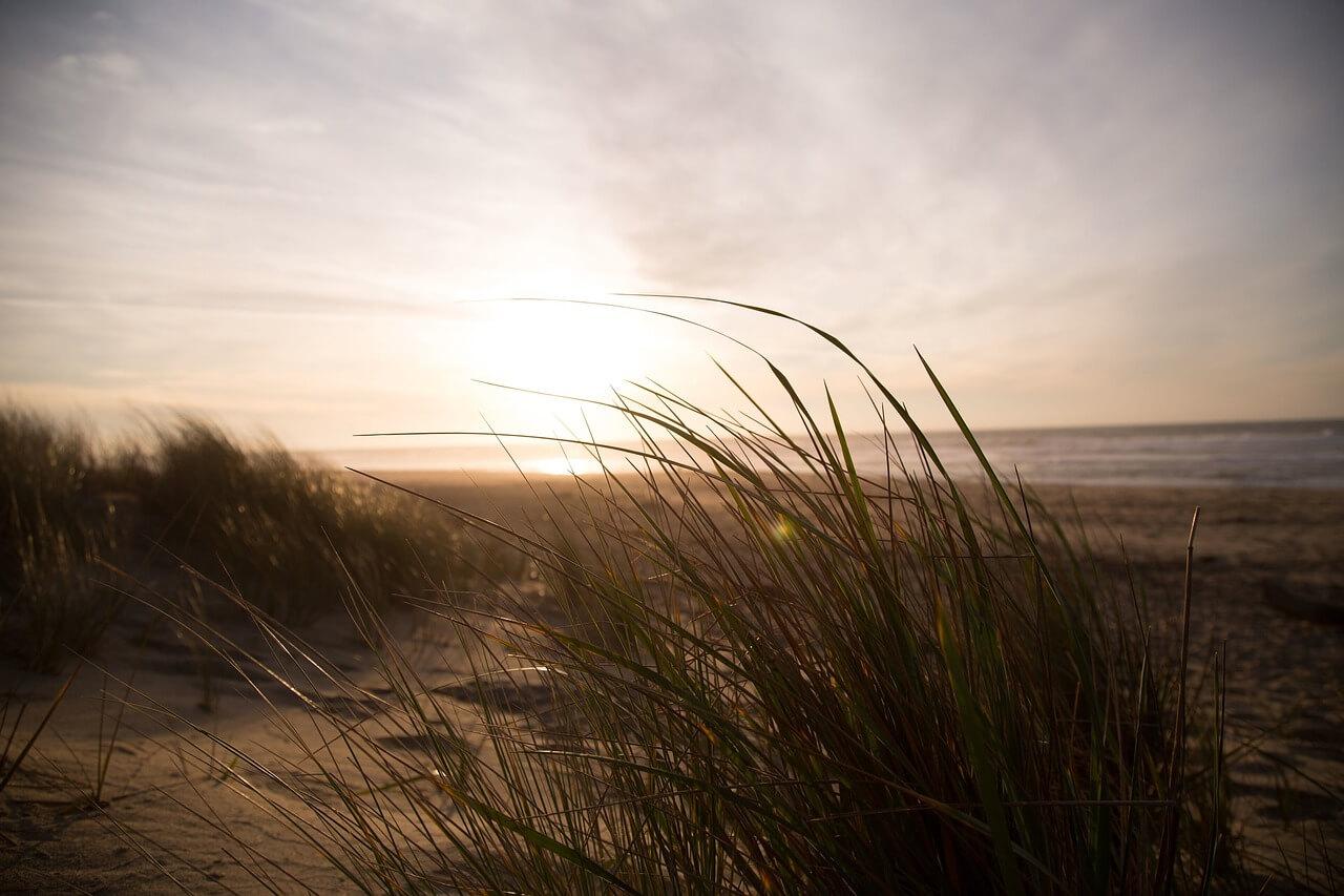 beach-690455_1280.jpg