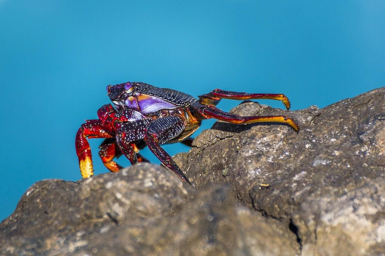 crab-1555584_1280.jpg