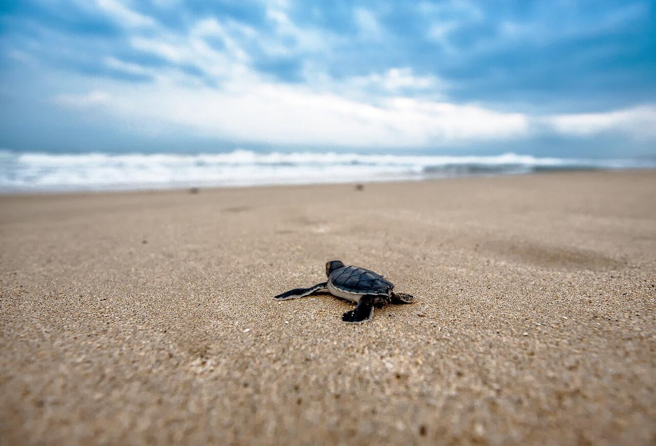 turtle-2201433_1280.jpg