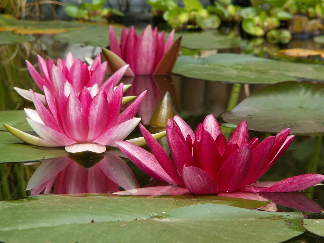 aquatic-plant-182635_1280.jpg