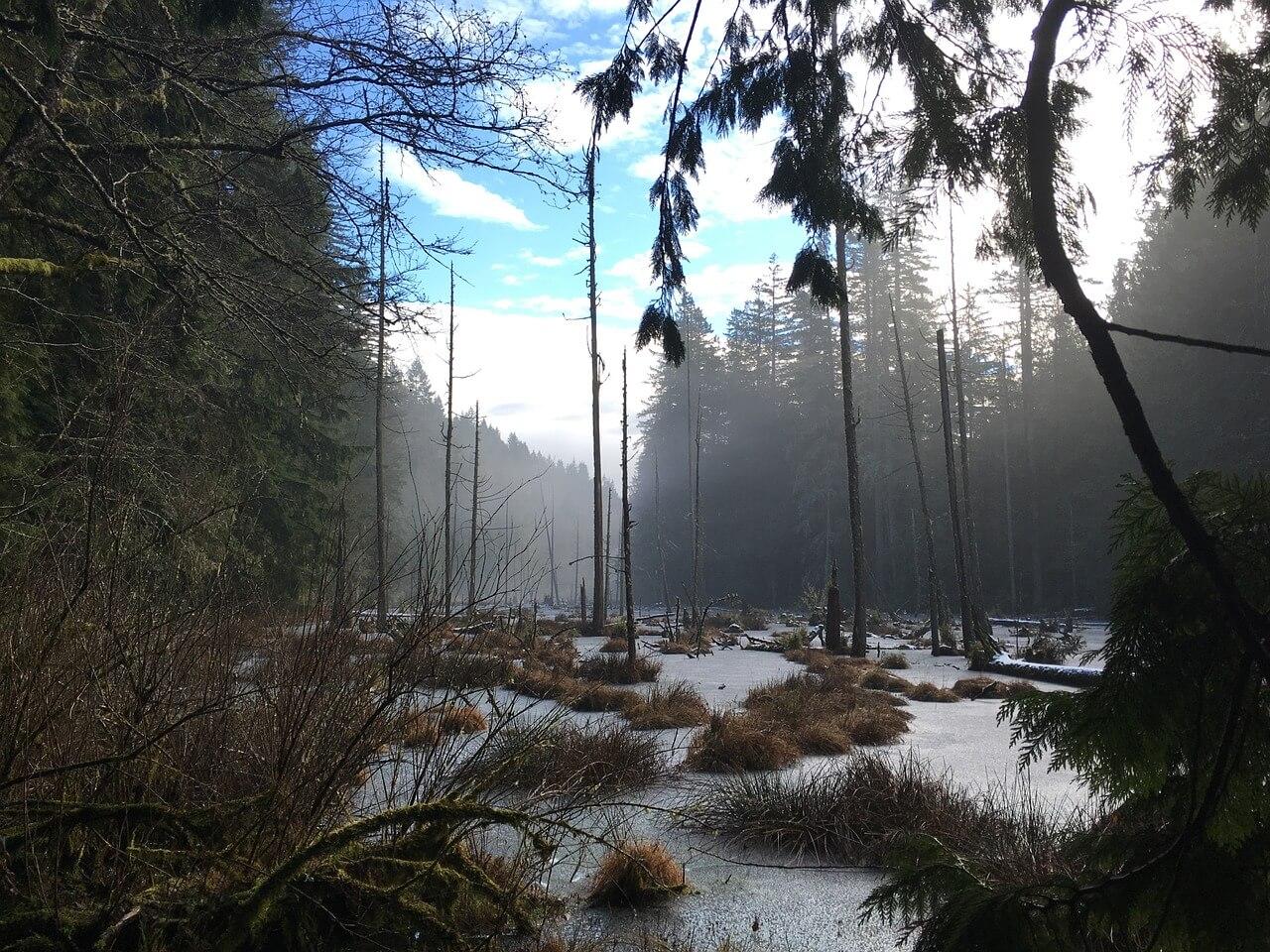swamp-1149011_1280.jpg