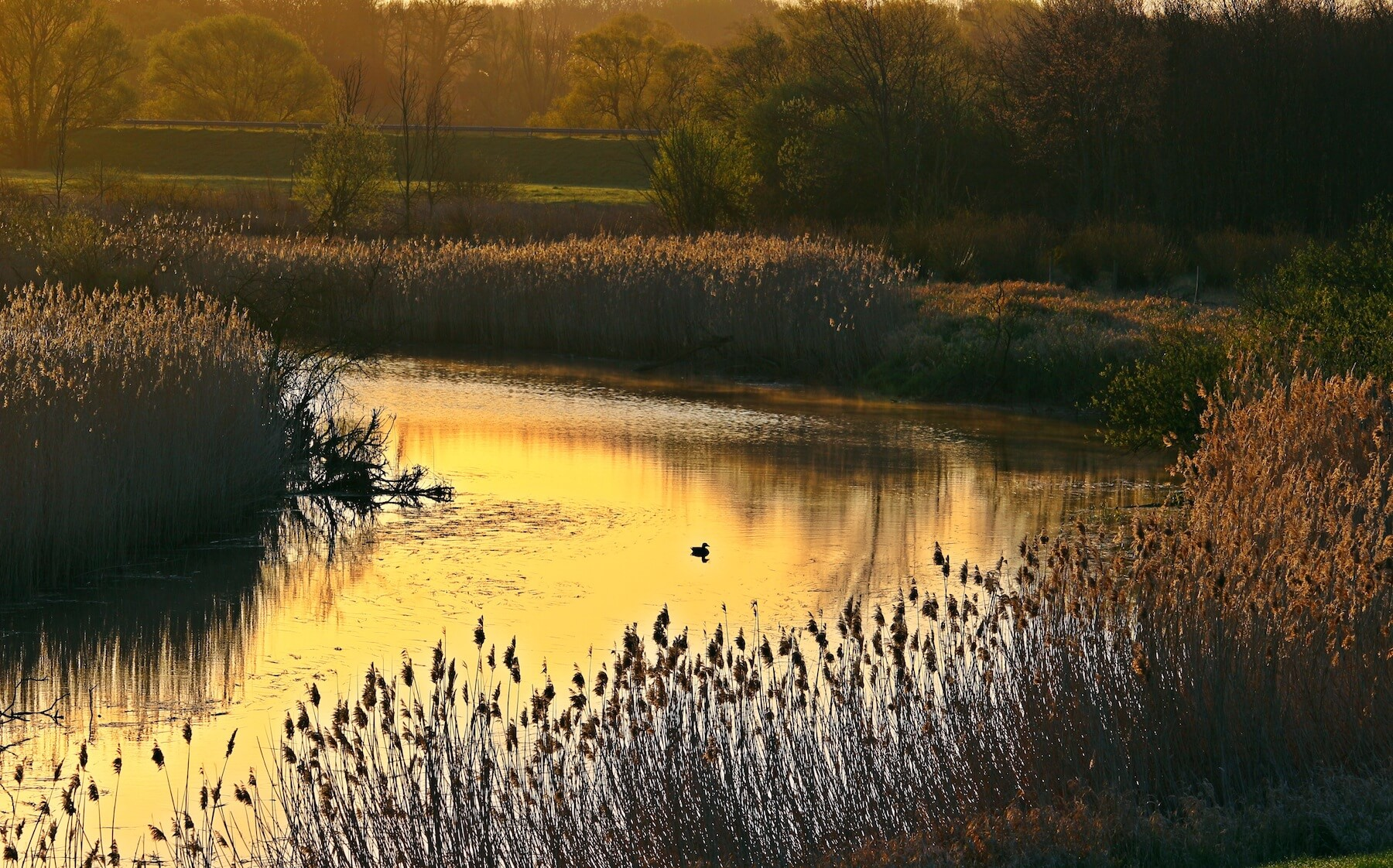 river-reed-elbe-river-bend-163061.jpeg