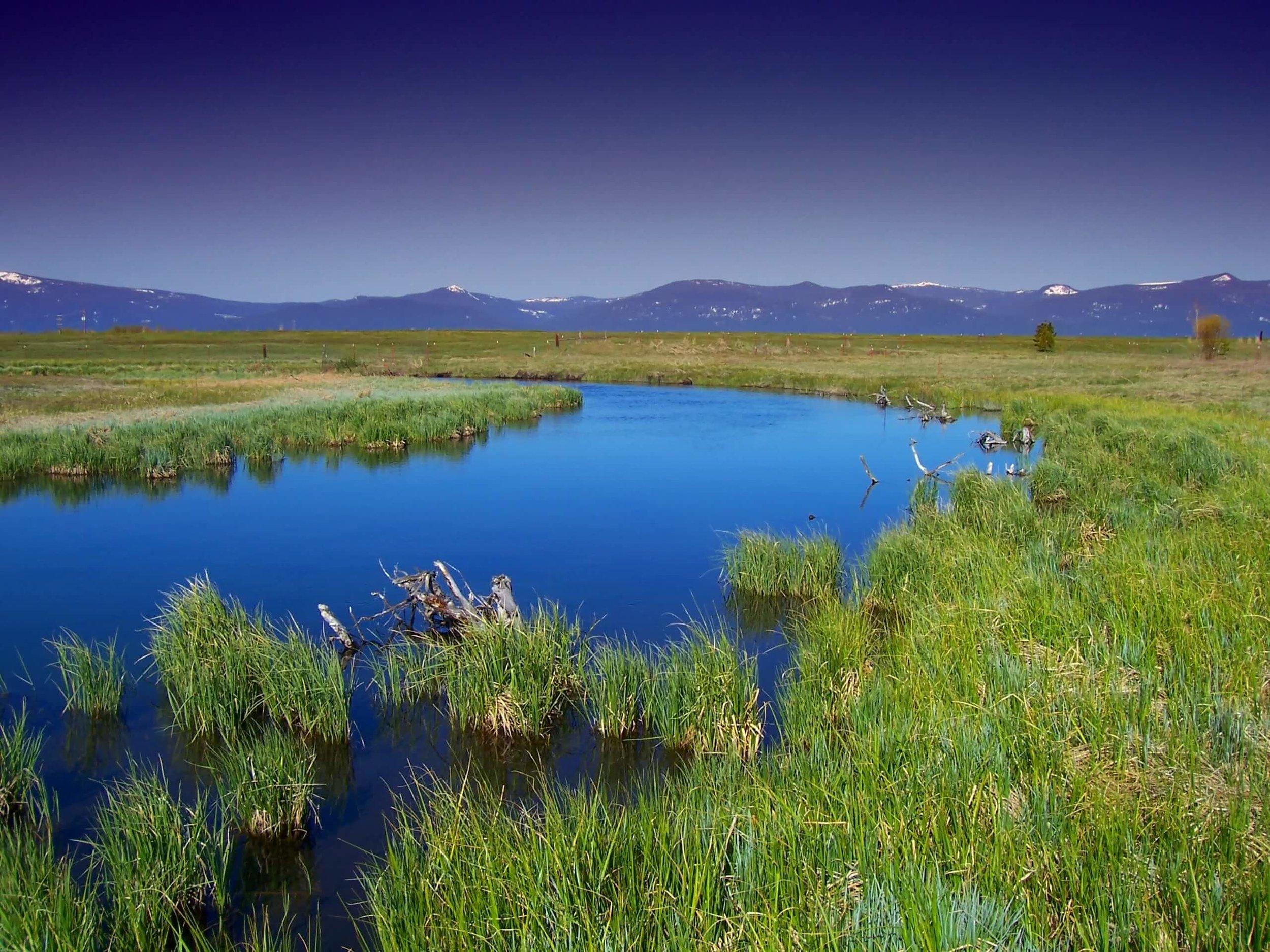 oregon-wood-river-marsh-water-stream-69409 (1).jpeg