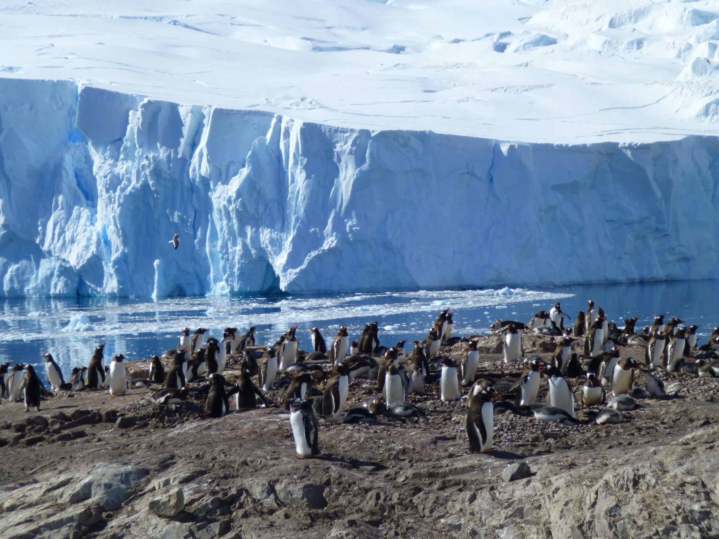 Antarctica_Luminix_20130201_121249_523.JPG