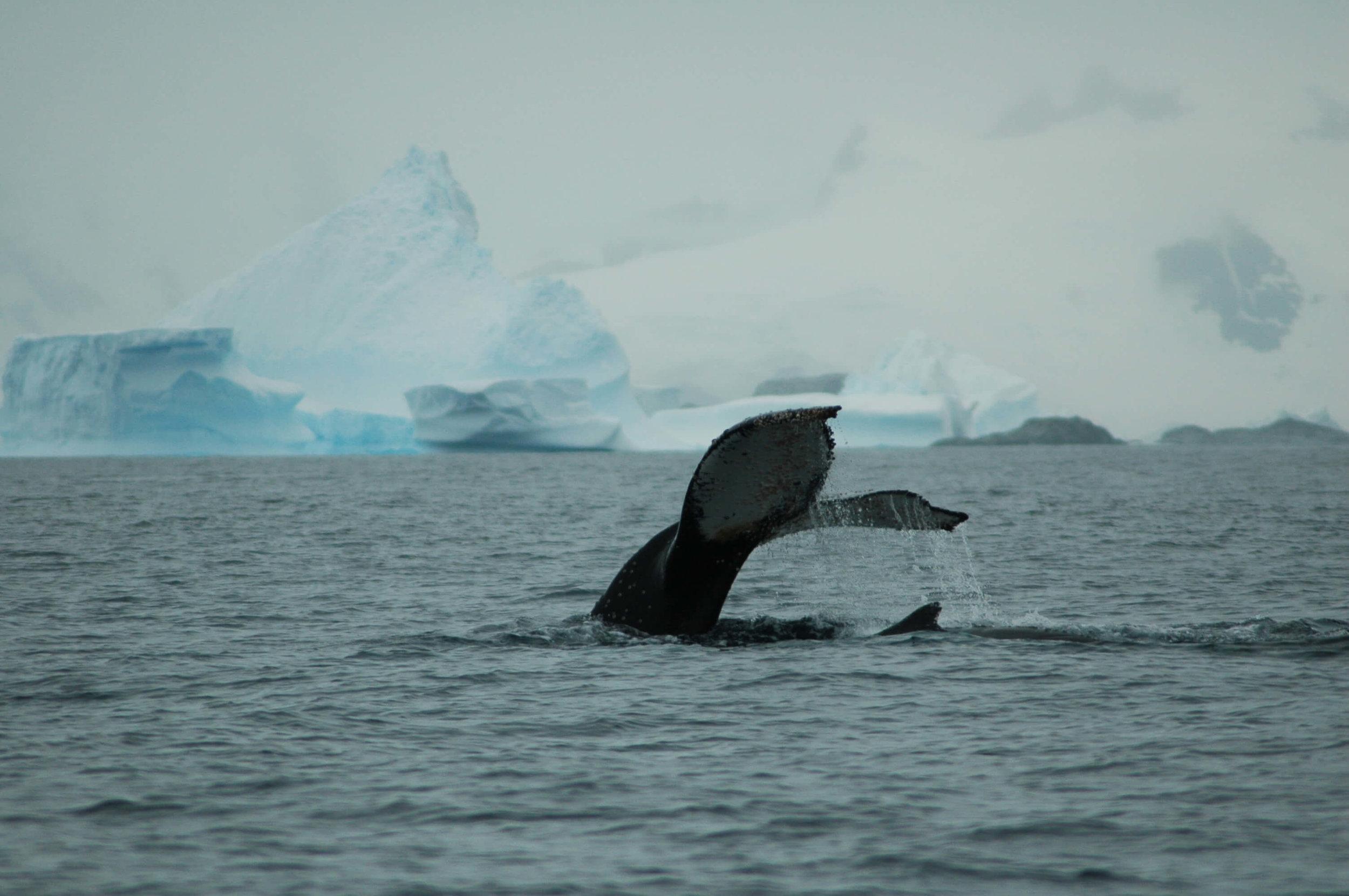 Antarctica_Nikon_20130203_120154_308.JPG
