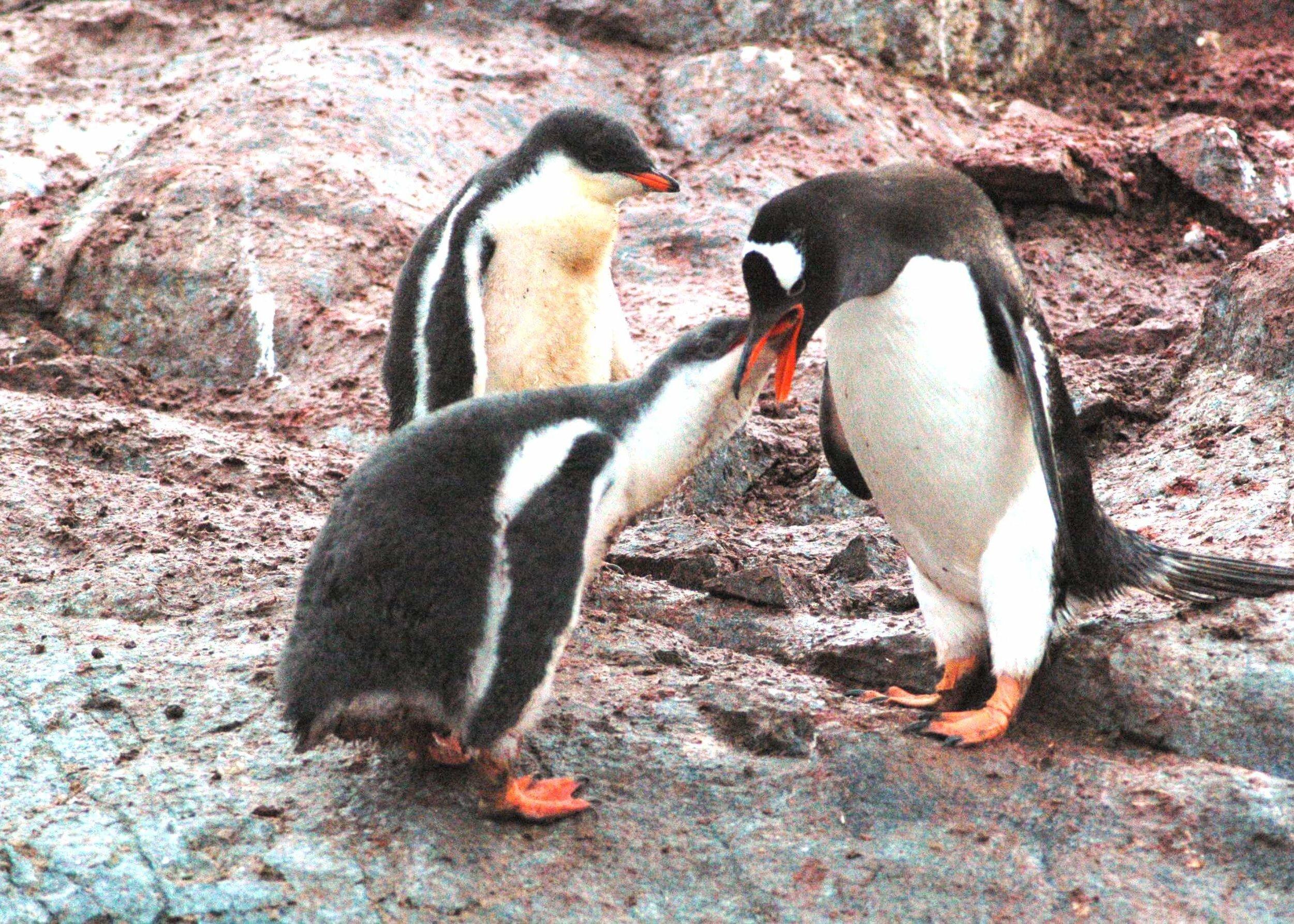Antarctica_Nikon_20130203_070625_368.JPG
