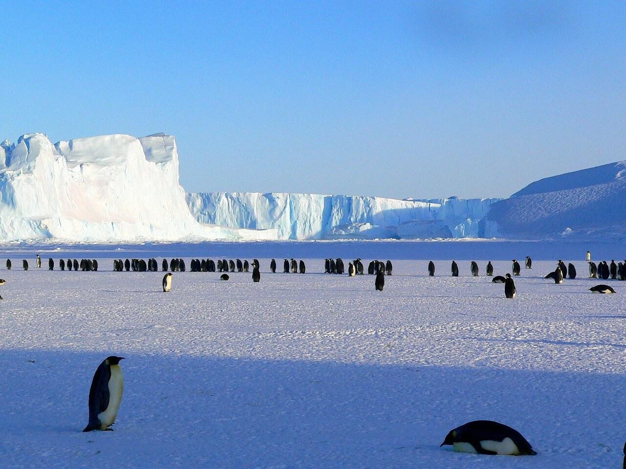 penguins-429136_1280.jpg