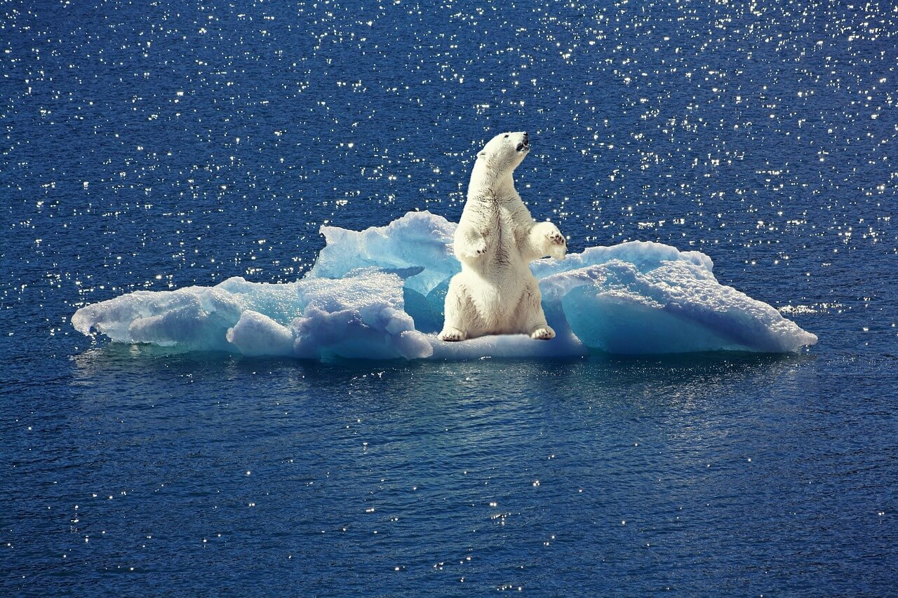 polar-bear-2199534_1280.jpg