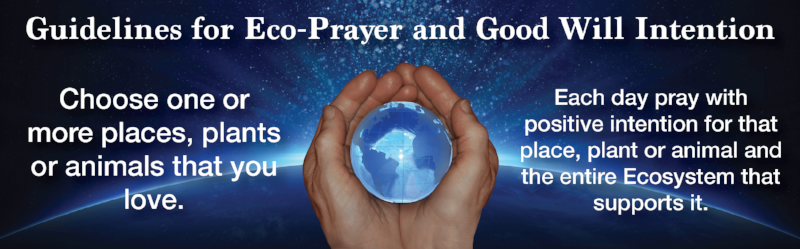 Eco-Prayer Guidelines Banner 2.png