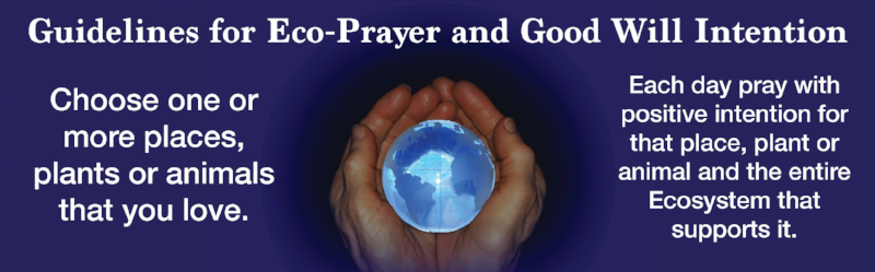 Eco-Prayer Guidelines Banner 3.png